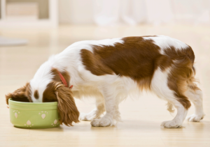 6 Things that give pets gas