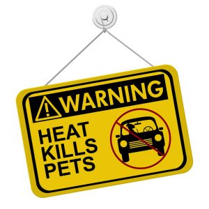 Heat Pet Safety
