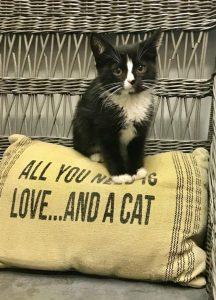 AHOWC Cat
