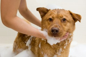 Grooming_Dog-Taking-Bath