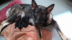 Medical_Mom and Pups